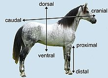 Human Anatomy/Terminology and Organization - Wikibooks, open books ...
