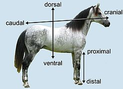 Horse Axes.JPG