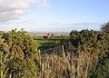 Horses - geograph.org.uk - 288088.jpg