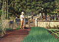 Horta irrigação manual REFON.JPG