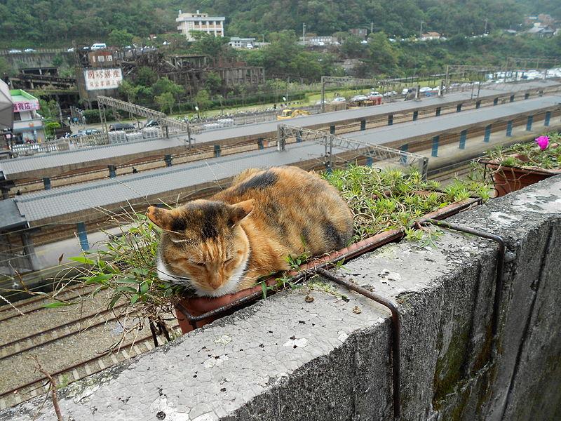 File:Houtong, Taiwan 01.jpg