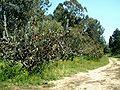 Ilanot National Arboretum c-RJP.jpg