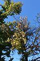 Ile de Bercy @ Lac Dausmenil @ Bois de Vincennes @ Paris (29528032074).jpg
