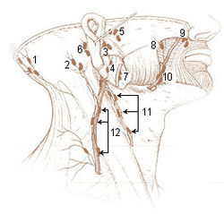 Enlarged Posterior Auricular Lymph Node http://en.wikipedia.org/wiki/Mastoid_lymph_nodes