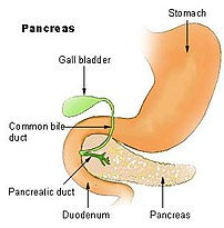 Region of pancreas