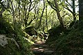 Ilsington, path to Haytor Down - geograph.org.uk - 991397.jpg