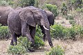 Impressions of Serengeti (134).jpg