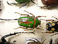 Insect Safari - beetle 08.jpg