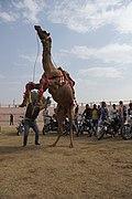International Camel Festival.jpg