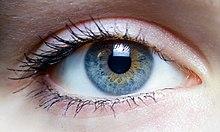 oeil humain