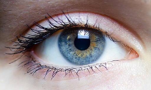 Iris - left eye of a girl