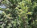 Irkutsk. Akademgorodok. Spring - panoramio (5).jpg