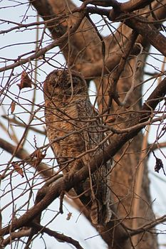 Is that an owl or a piece of wood.jpg