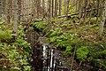 Isojärvi National Park - stream.jpg
