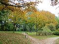 Itzehoe Herbst-am-Planschbeckengelände Okt-2015 IMG 6953.JPG
