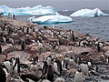 Jan2009AntarticaSailTrip022 (3262375853).jpg