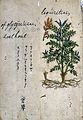 Japanese Herbal, 17th century Wellcome L0030089.jpg