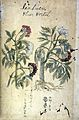 Japanese Herbal, 17th century Wellcome L0030113.jpg