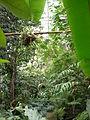 Jardin des plantes Paris Serre tropicale2.JPG