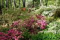 Jenkins Arboretum - DSC00596.JPG