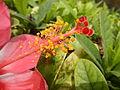 JfLakandulaflowerPampanga0214fvf 13.JPG
