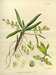 Joseph Dalton Hooker - Flora Antarctica - vol. 3 pt. 2 plate 128 (1860).jpg