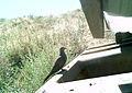 Juniper Dunes Critter Cam (21468824806).jpg