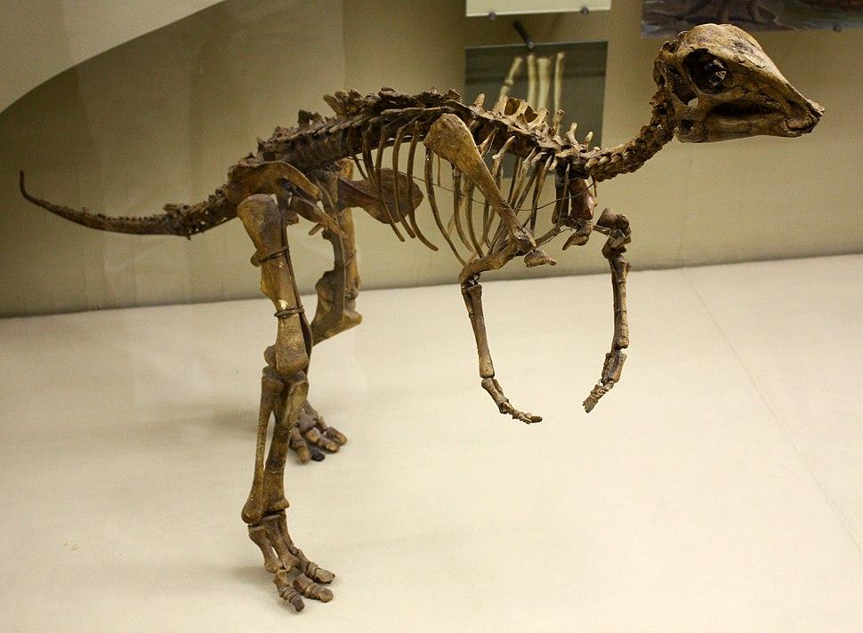 Juvenile hadrosaur