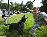 K-9 handlers, Pursuing the enemy 150729-F-IF940-062.jpg