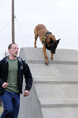K-9 training 150319-F-OH119-861