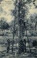 KITLV - 1404045 - Kleingrothe, C.J. - Medan - Para Rubber, 23-year old tree - .tif