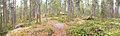 Kanavuori panorama 3.jpg