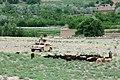 Kapisa Province of Afghanistan.jpg