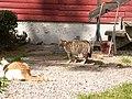 Katter (6062416912).jpg