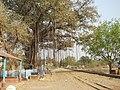 Katwa to Ahmedpur Narrow gaugue railway 14.jpg