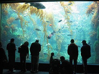 Birch Aquarium - Image: Kelp tank (Birch Aquarium at Scripps, 2007)