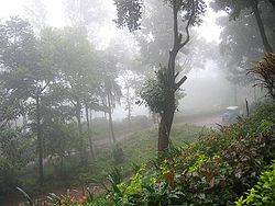 Foggy day at Kemmangundi
