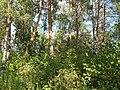 Kharkiv Botanical Garden 01.jpg