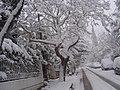 Kifisia Athens - panoramio.jpg