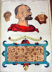 Illustration über das Gehör aus Musurgia universalis (1650) (Quelle: Wikimedia)