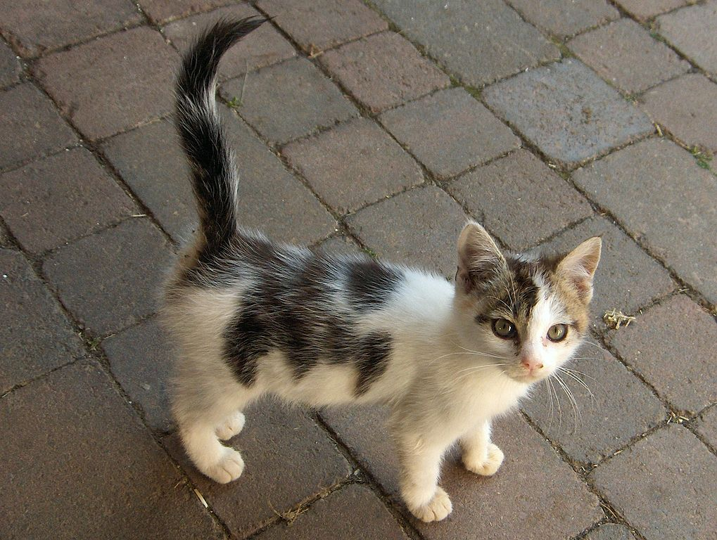White With Gray Speckles Cat