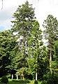 Kivik-Esperöds Arboretet.jpg