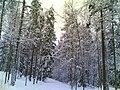 Kivikon Ulkoilupuisto - panoramio (1).jpg