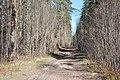 Kleistu mežs, Babītes pagasts, Babītes novads, Latvia - panoramio.jpg