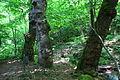 Koleshinski vodopad 36.JPG
