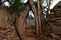 Konso village of Mecheke (3) (28535260994).jpg