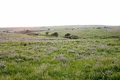The Konza tallgrass prairie in the Flint Hills of northeastern Kansas.