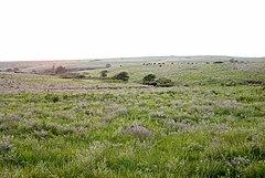 The Konza tallgrass prairie in the Flint Hills of northeastern Kansas.