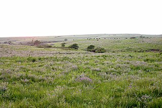 Konza Prairie Biological Station native tallgrass prairie preserve in the Flint Hills of northeastern Kansas, United States
