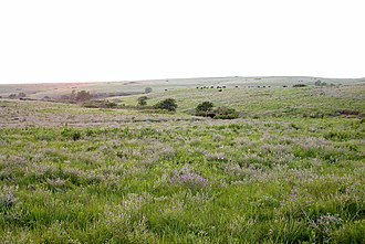 Grassland - The Konza tallgrass prairie in the Flint Hills of northeastern Kansas